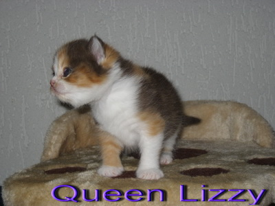 Queen Lizzy-160615